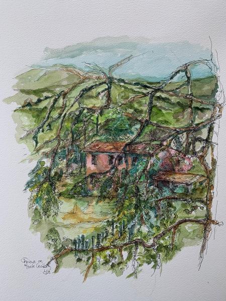 vineyard Monte Cecilia